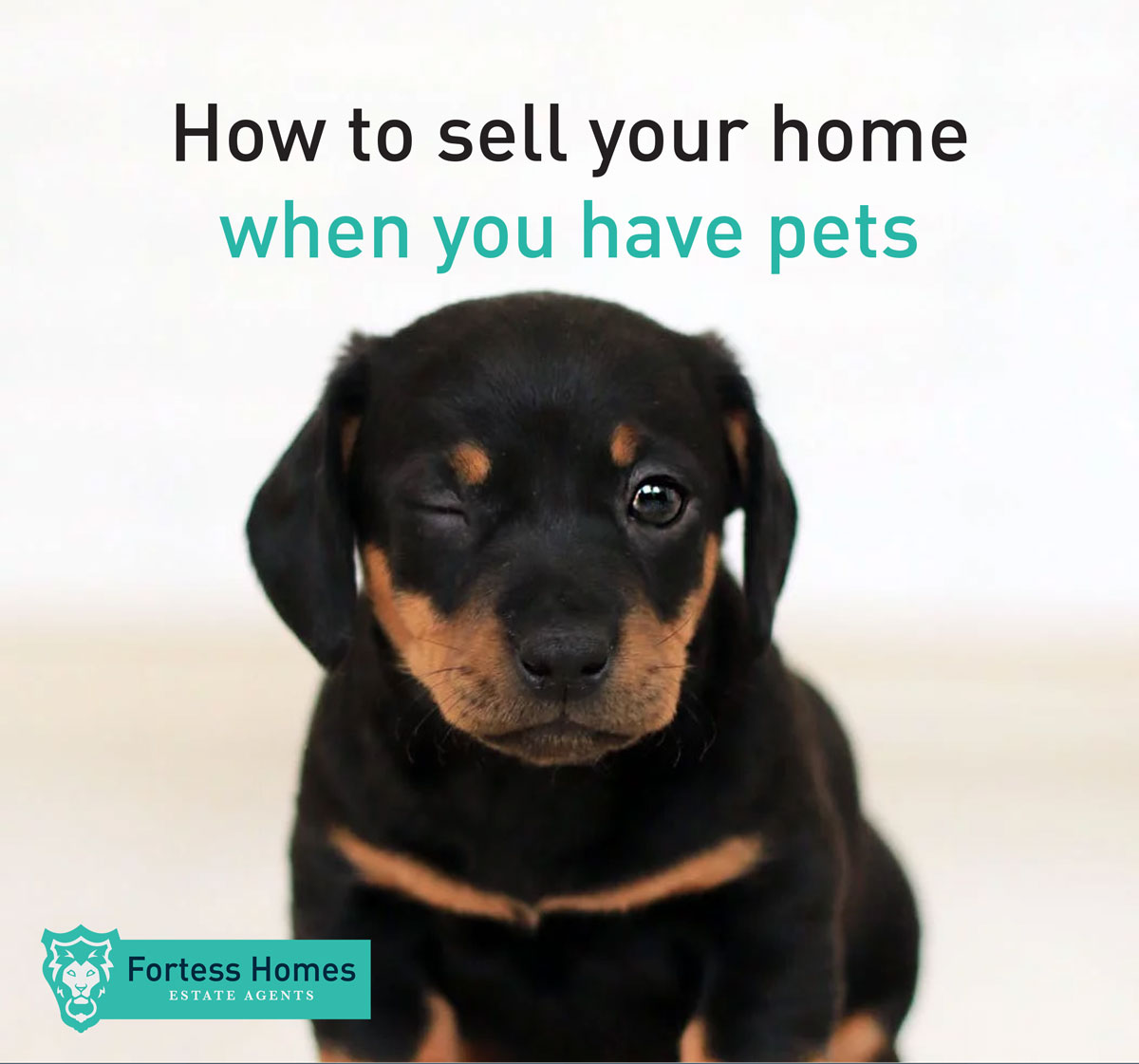 How to sell your home when you have pets